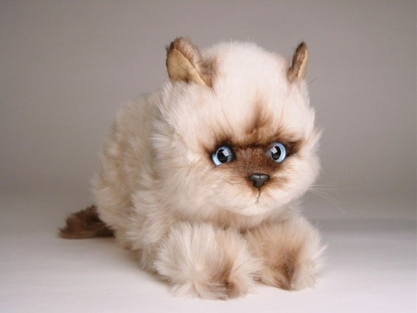 Piutre Duckende Seal Point Katze ca. 23cm Crouching Seal Himalayan cat cm.23