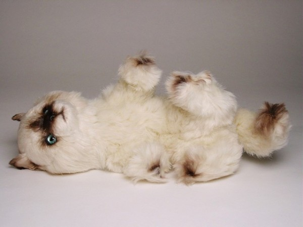 Piutre Spielende Seal Point Katze ca. 30cm Playing Seal Himalayan cat cm.30