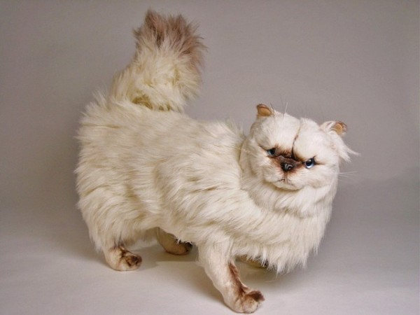 Piutre Stehende Perser Colourpoint Katze 2430 ca.50cm Standing Himalayan Persian cat cm.50